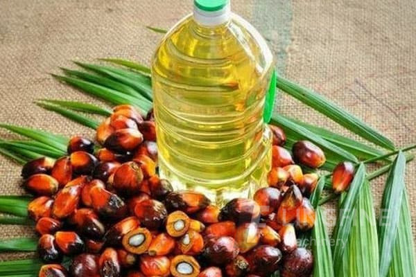 how a small palm oil mill plant is set up?