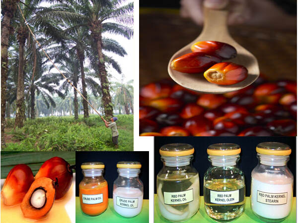 Applications of palm oil - Palm Oil