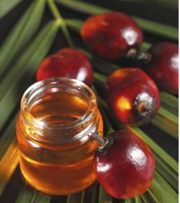 Palm Fruit 1 - What Are the Health Benefits of Red Palm Oil from Palm Fruit?