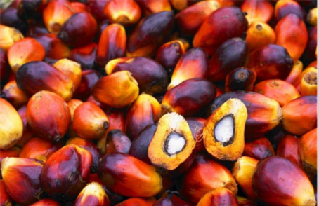 Palm Fruit - What Are the Health Benefits of Red Palm Oil from Palm Fruit?