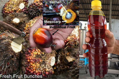 Palm oil extraction machinery in Kenya