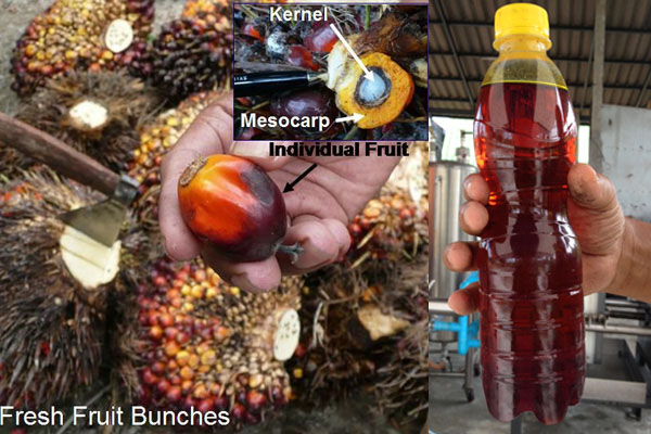 Palm oil extraction machinery - Palm oil extraction machinery in Kenya