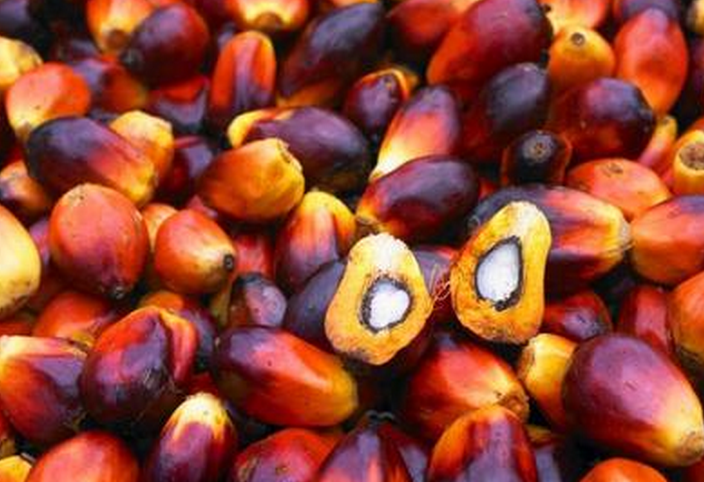 Plam fruit - How to extract palm oil from palm fruit bunches?