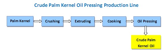 crude palm kernel oil pressing production line - Palm Kernel Oil Pressing Machine