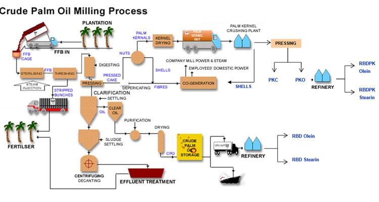 crude palm oil process chart - Crude Palm Oil Production Process