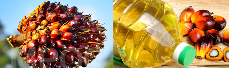 palm kernel oil and palm fruit - Palm Kernel Oil Expeller