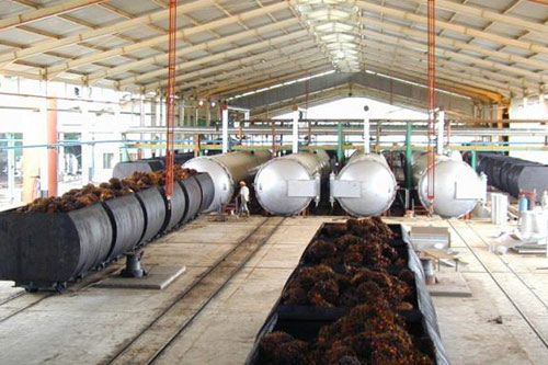 palm oil processing 1 - Congo palm oil processing production line